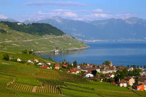 Dezaley Vineyards on the banks of Lake Geneva, Switzerland