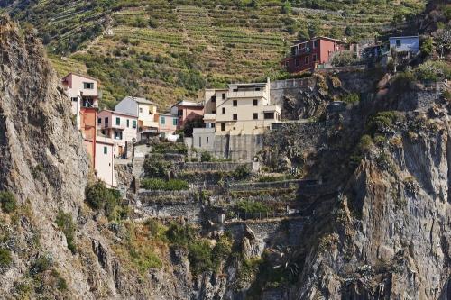 Vineyards in Cinque Terre, Italy