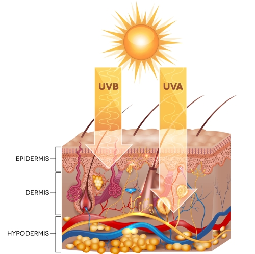 Diagram showing how UVA and UVB rays damage the skin.