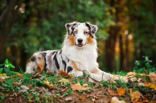 Great Dog Breeds For Outdoor Fun Vine Vera