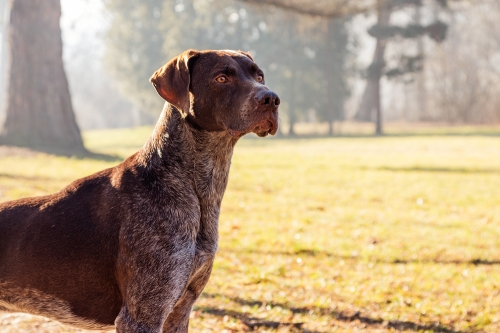 Dog Breeds For Outdoor Fun Vine Vera